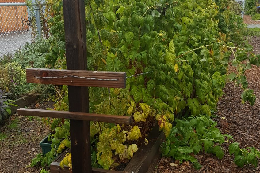 New Start Community Garden – King Conservation District – Community ...